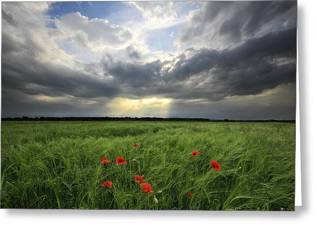Wheat Field Sky Pictures Greeting Cards - Wheat field Greeting Card by Nino Marcutti
