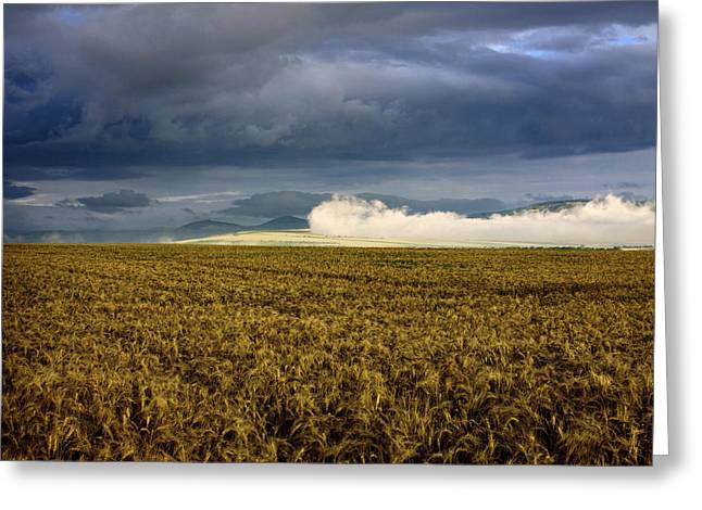 Cultivation Greeting Cards - Wheat field under a overcast. Auvergne. France. Greeting Card by Bernard Jaubert
