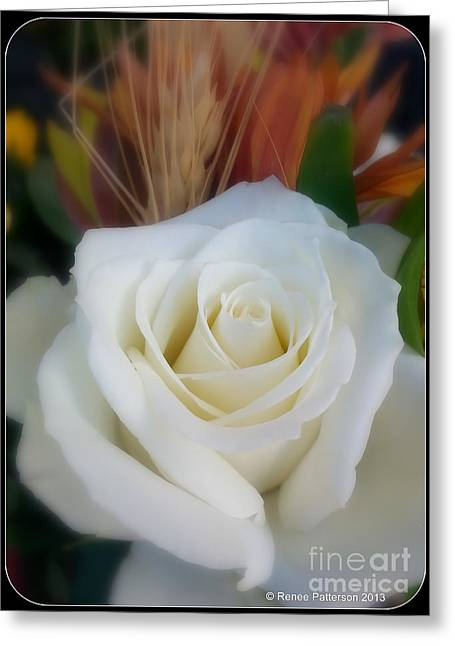 Rose Petals Greeting Cards - White Beauty Greeting Card by Renee Patterson