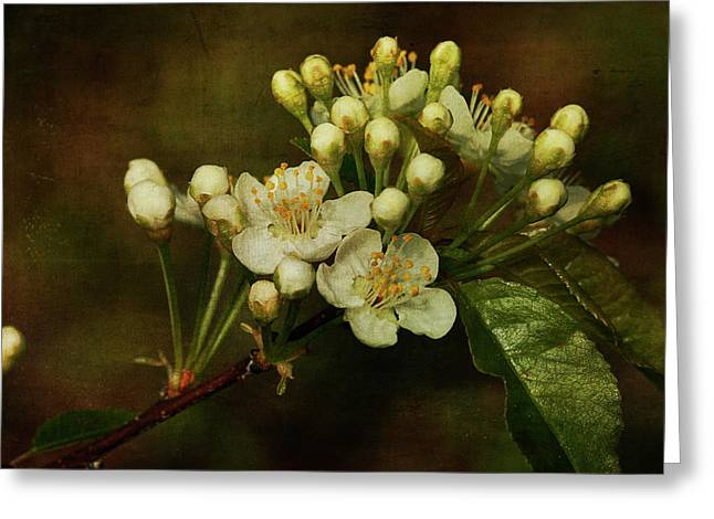 Cindi Ressler Greeting Cards - White Blossoms Greeting Card by Cindi Ressler