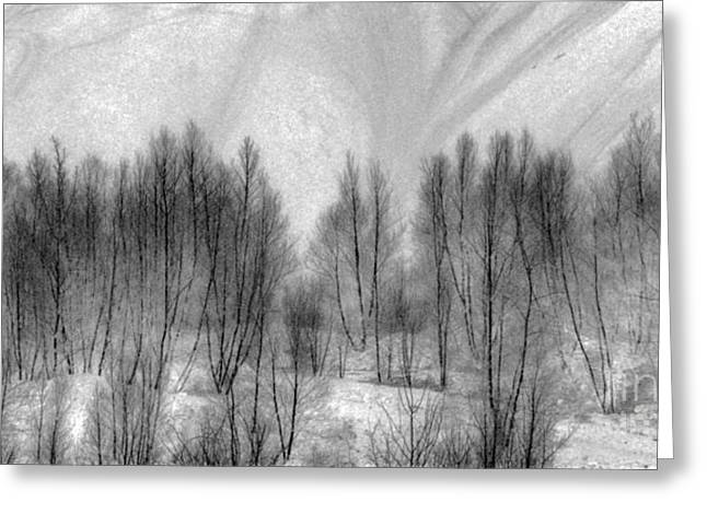 Culm Greeting Cards - White Forest Greeting Card by Jim Cook