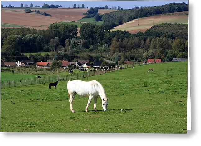 Horse Images Greeting Cards - White Horse In Landscape Greeting Card by Aidan Moran