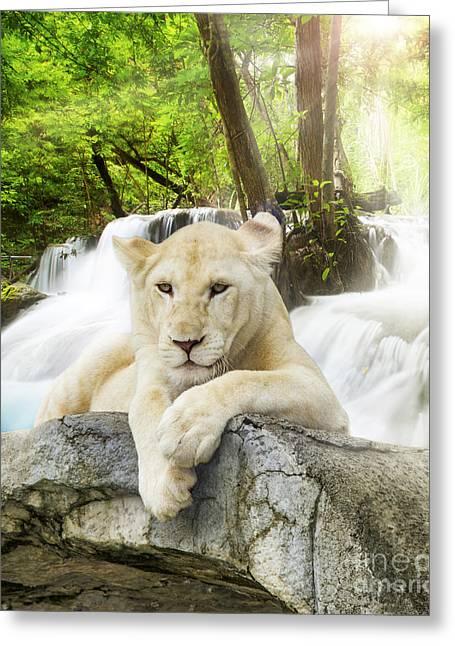 Amazing Sunset Greeting Cards - White lion Greeting Card by Anek Suwannaphoom