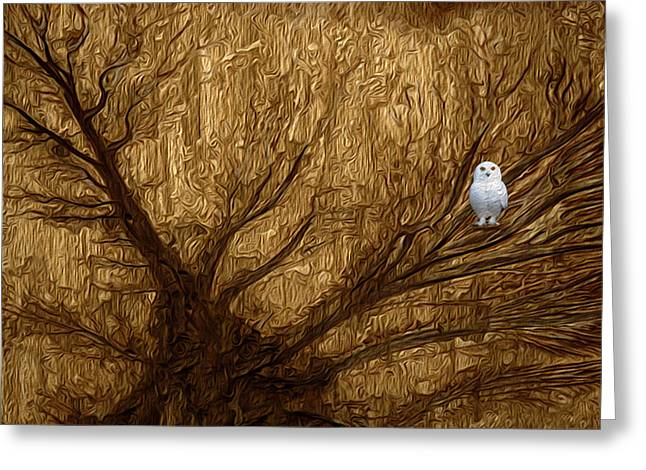Asymmetrical Greeting Cards - White Owl Greeting Card by Jack Zulli
