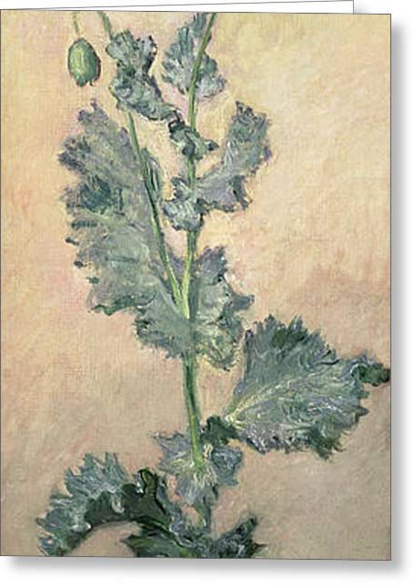 Botanical Greeting Cards - White Poppy Greeting Card by Claude Monet