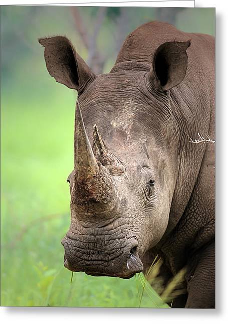 Fauna Greeting Cards - White Rhinoceros Greeting Card by Johan Swanepoel