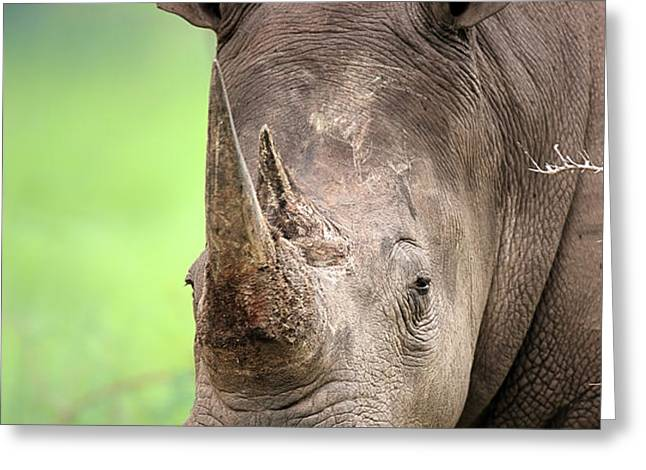 White Rhinoceros Greeting Card by Johan Swanepoel