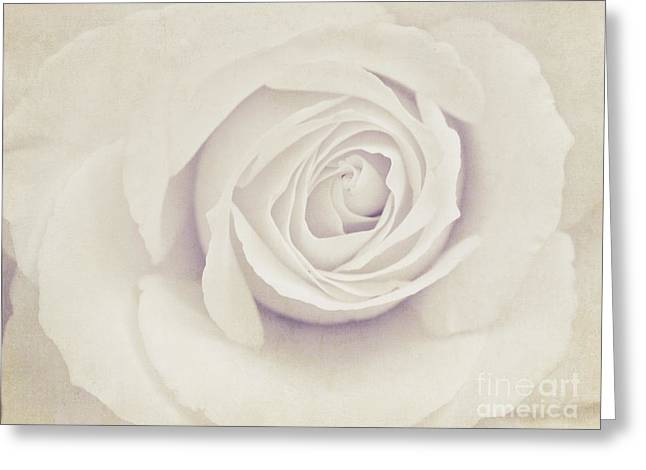 Sweetly Greeting Cards - White Rose Greeting Card by Diana Kraleva