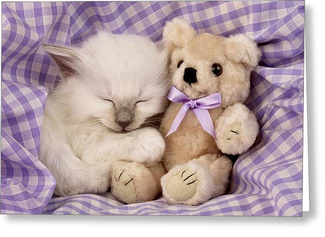 Cute Kitten Greeting Cards - White Sleeping Cat Greeting Card by Greg Cuddiford