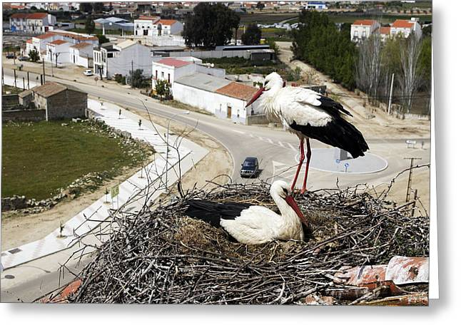 White Storks At Nest Greeting Card by M. Watson