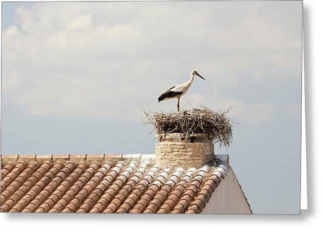 White Storks Nesting Greeting Card by Ashley Cooper