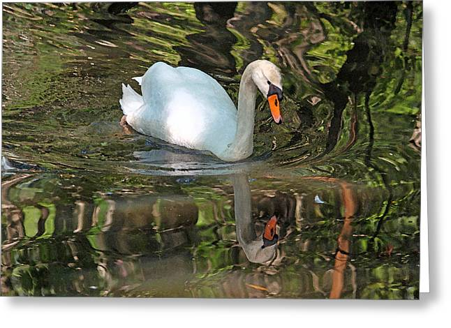 Low Country Watercolor Greeting Cards - White Swan II Greeting Card by Suzanne Gaff
