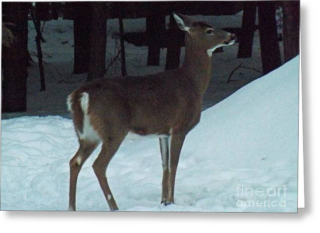 White Tail Deer Greeting Card by Brenda Brown