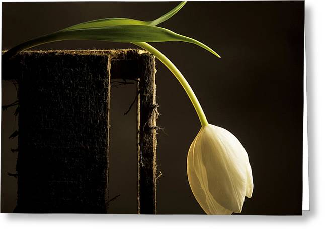Wooden Box Greeting Cards - White tulip Greeting Card by Bernard Jaubert