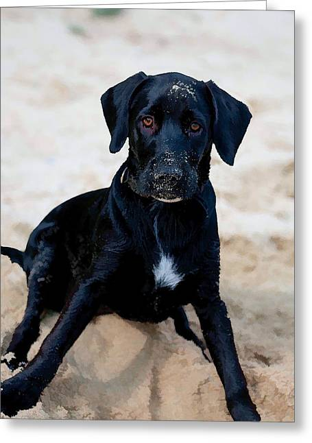 Retriever Prints Digital Art Greeting Cards - Who Me ? Greeting Card by Roy Pedersen