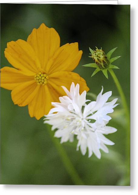 Tacoma Greeting Cards - Wild Flowers Greeting Card by Paul Shefferly