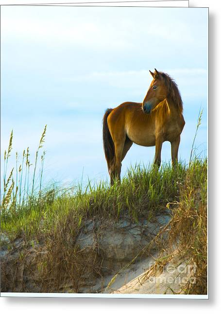 Wild Horses Photographs Greeting Cards - Wild Horse Greeting Card by Diane Diederich