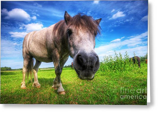 Subtle Colors Greeting Cards - Wild young horse on the field Greeting Card by Michal Bednarek
