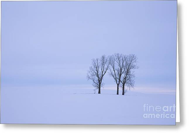 Snow-covered Landscape Greeting Cards - Wilderness of White Greeting Card by Idaho Scenic Images Linda Lantzy