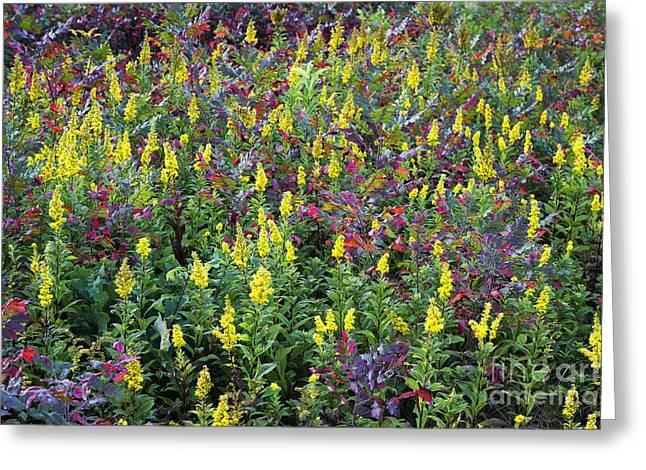 Wildflower Meadow Greeting Card by John Greim