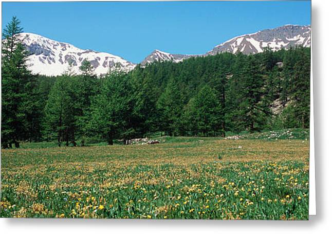 Wildflowers In A Field With Snowcapped Greeting Card by Panoramic Images