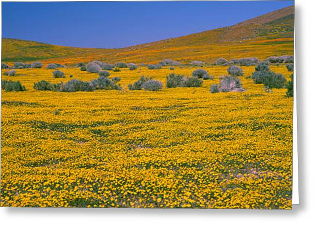 Wildflower Photography Greeting Cards - Wildflowers On A Landscape, California Greeting Card by Panoramic Images