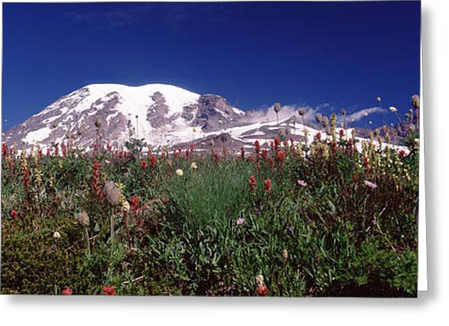 Pierce County Greeting Cards - Wildflowers On Mountains, Mt Rainier Greeting Card by Panoramic Images