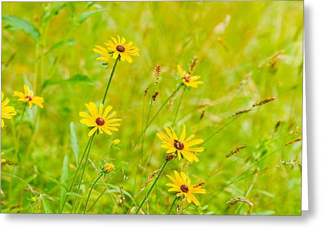 Wildflower Photography Greeting Cards - Wildflowers, Portville, New York State Greeting Card by Panoramic Images