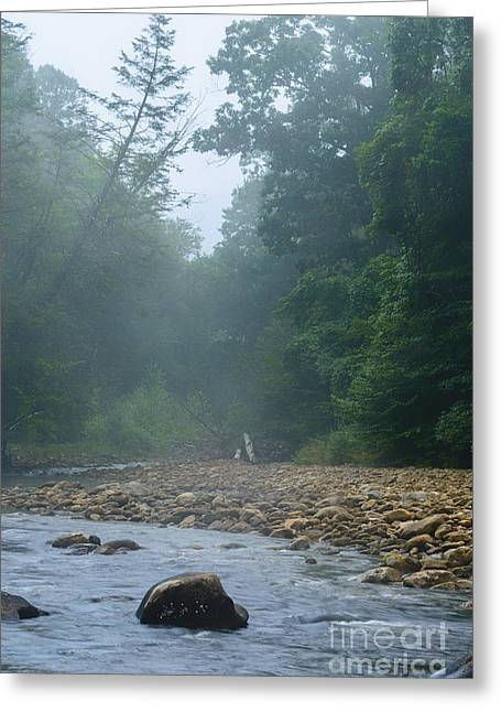 Williams River Summer Mist Greeting Card by Thomas R Fletcher