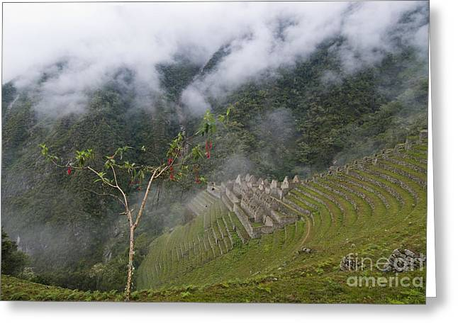 Forever Young Greeting Cards - Winay Wayna Forever Young Inca Ruins Greeting Card by William H. Mullins