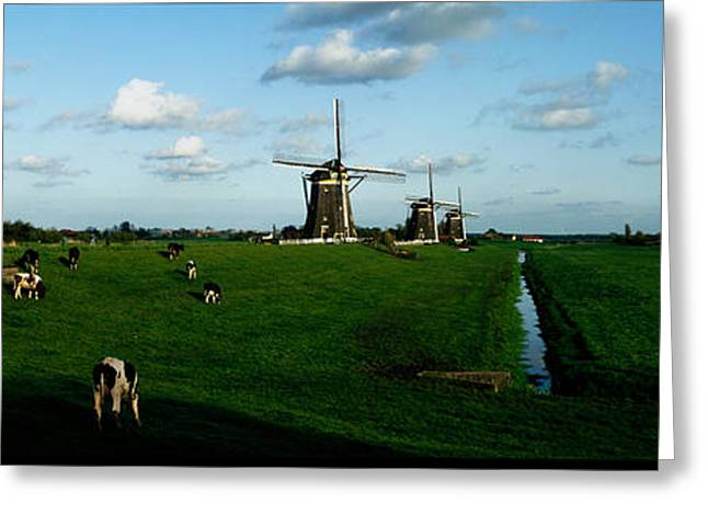 Cow Images Greeting Cards - Windmills, Netherlands Greeting Card by Panoramic Images