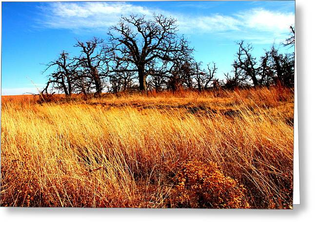 Mickey Harkins Greeting Cards - Winds of the Plains Greeting Card by Mickey Harkins