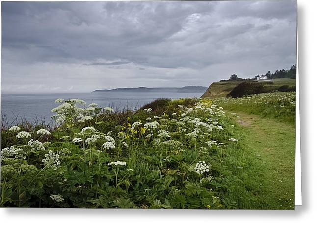 Fort Casey Greeting Cards - Windswept May Meadow Greeting Card by Tom Trimbath
