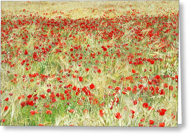 Poppy Photo Greeting Cards - Windy poppies Greeting Card by Guido Montanes Castillo