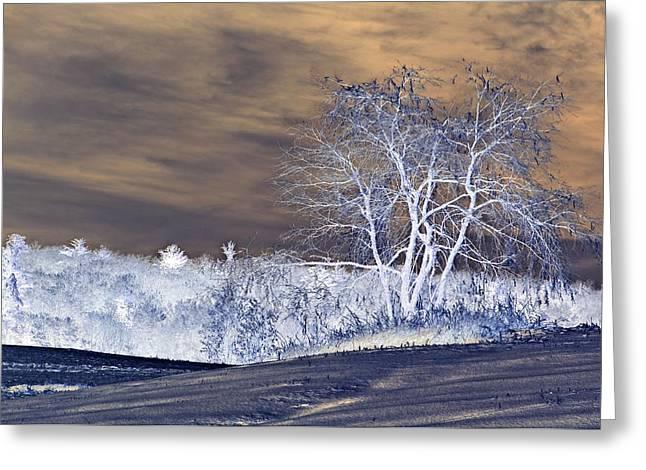 Winter Blues Greeting Card by Susan Leggett
