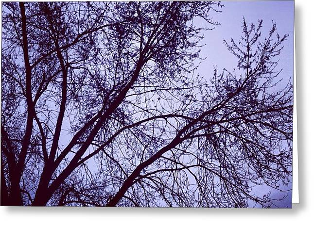Toni Martsoukos Greeting Cards - Winter Blues Greeting Card by Toni Martsoukos