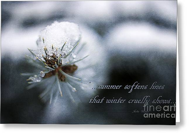 Close Focus Nature Scene Greeting Cards - Winter Greeting Card by Darren Fisher