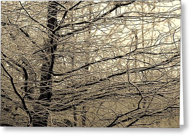Winter Images Greeting Cards - Winter Forest Greeting Card by Bonnie Bruno