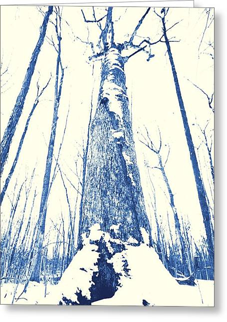 Snow Covered Ground Greeting Cards - Winter Forest Greeting Card by Dan Sproul