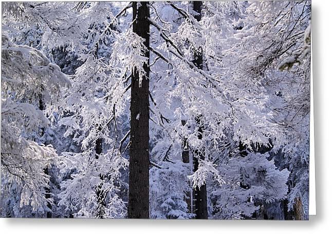Snowy Evening Greeting Cards - Winter Forest Greeting Card by Karol Kozlowski