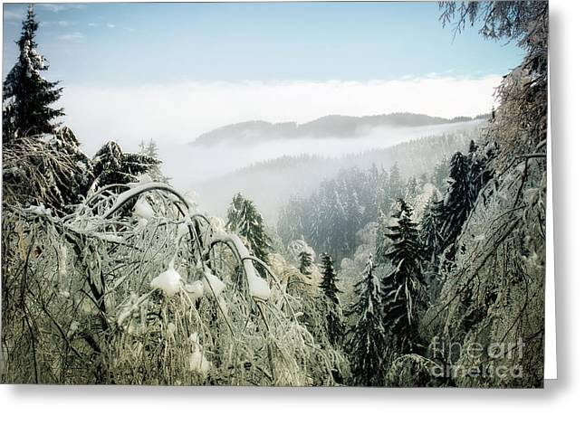 Winter Forest Greeting Card by Sinisa Botas