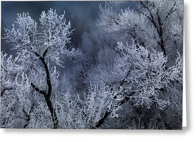 Winter Frost Greeting Card by Leland D Howard