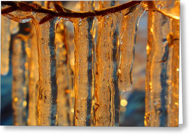 Fineartamerica Greeting Cards - Winter Gold Greeting Card by Dianne Cowen