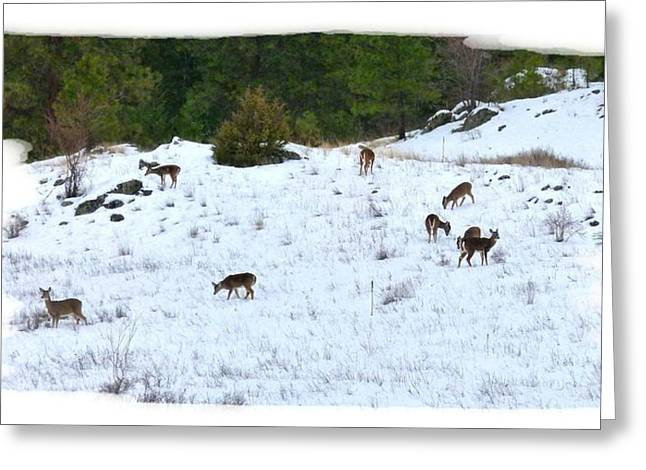 Grazing Snow Greeting Cards - Winter Grazing Greeting Card by Will Borden