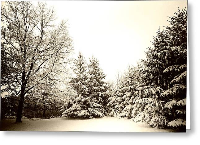 Wintry Greeting Cards - Winter Grove Greeting Card by Ryan McGuire