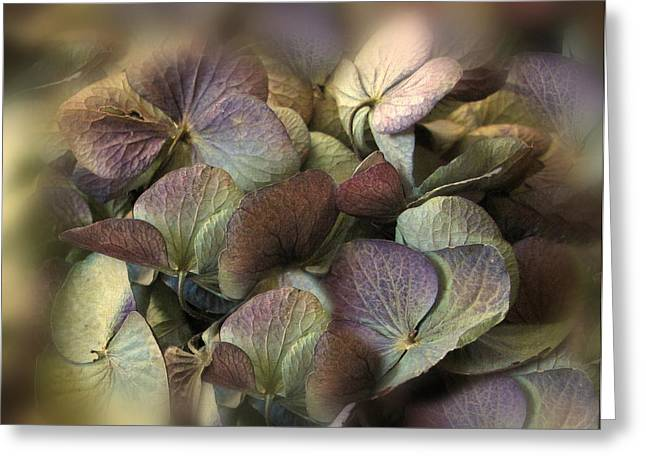 Muted Greeting Cards - Winter Hydrangea Greeting Card by Jessica Jenney