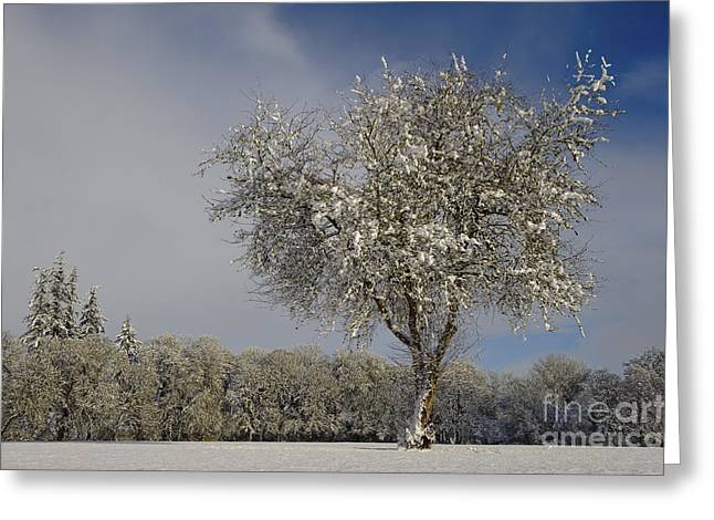 Snowstorm Greeting Cards - Winter In Oregon Greeting Card by John Shaw