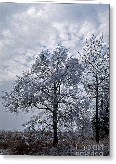 Nature Picture Greeting Cards - Winter Lace Greeting Card by Skip Willits