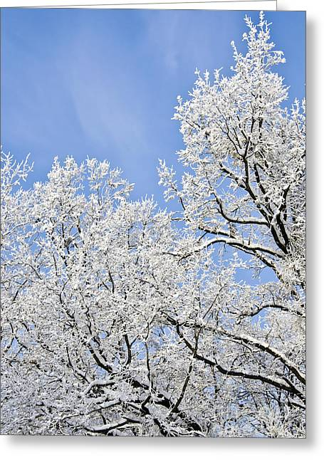 Snow-covered Landscape Greeting Cards - Winter Landscape Greeting Card by Dan Radi