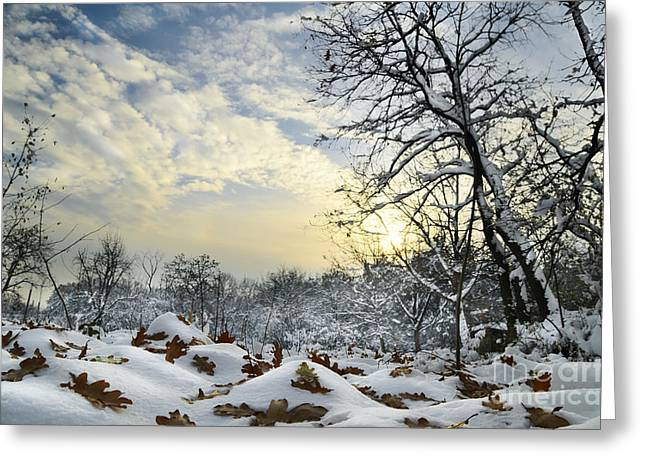 Fir Pyrography Greeting Cards - Winter Landscape Greeting Card by Jelena Jovanovic